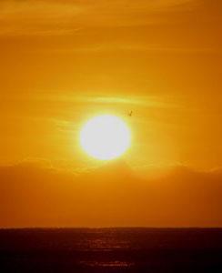 Sol en Astrología