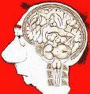 cerebro en la cabeza