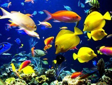 peces en oceano