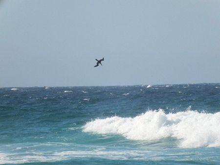 libertad ave en el mar