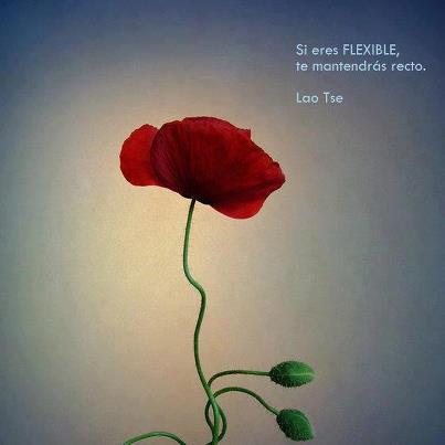 Lao Tse flexible