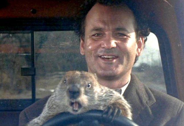 dia-marmota