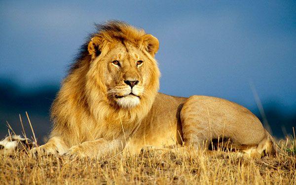 leon-tumbado