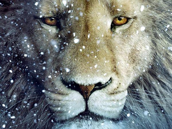 leon-ojos