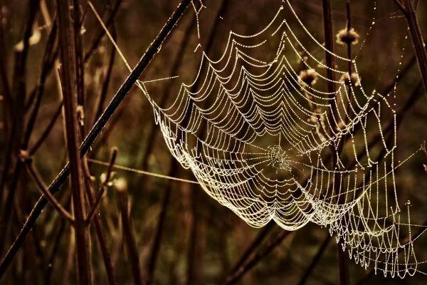 Tela de araña